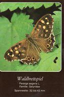 Waldbrettspiel (Pararge Aegeria) - Schmetterlinge