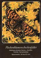 Flockenblumenscheckenfalter (Melitaea Phoebe) - Schmetterlinge