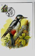 Belgie 3162  - Maximumkaart Max  - Vogels Type A. Buzin  - 2003 - Cartes-maximum (CM)
