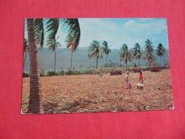Harvesting Sugar Cane  Jamaica    Has  Norway Stamp & Cruise Ship Cancel Cancel     Ref 2820 - Jamaïque