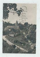 Hodeng-au-Bosc (76) : Troupeau De Vaches Dans Le Quartier De L'église  En 1950  PF. - France