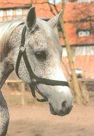 HORSES / PFERDE / CHEVAUX /  POSTCARD UNUSED SIZE XL   ( H  4602 ) - Pferde