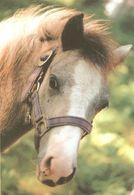 HORSES / PFERDE / CHEVAUX /  POSTCARD UNUSED SIZE XL   ( H  4603 ) - Pferde