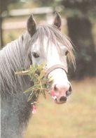 HORSES / PFERDE / CHEVAUX /  POSTCARD UNUSED SIZE XL   ( H  4604 ) - Pferde