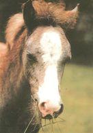 HORSES / PFERDE / CHEVAUX /  POSTCARD UNUSED SIZE XL   ( H  4605 ) - Pferde