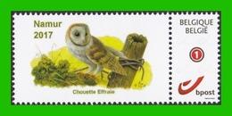 BUZIN - Chouette Effraie - Namur 2017 - Quinzaine De La Nature - 1985-.. Vögel (Buzin)