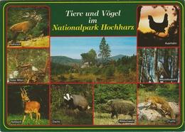 Duitsland : Nationalpark Hochharz - Tiere Und Vögel. - Allemagne