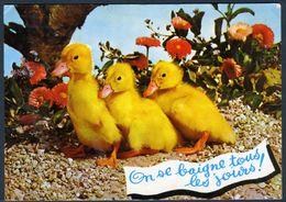 "CPM Humoristique ""canetons"" - Animaux & Faune"