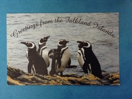 POSTCARD CARTOLINA FORMATO GRANDE VIAGGIATA ISOLE FALKLAND ISLANDS PINGUINI - Isole Falkland