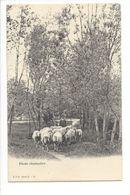 19177 - Etude Champêtre Moutons Et Berger - Suisse