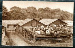"""CPSM S/w Firmen Werbekarte German Empires Kakaoherstellung 1925""""Sortieren Der Kakaokerne Auf Den Trockend..""""1 AK,benutzt - Händler"""