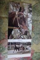 "Old USSR Postcard  - 1970s Serie   -  Orlov Trotter ""Kvadrat"" - Horse - Very Rare! - Chevaux"