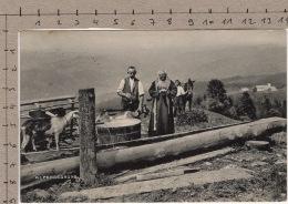 Alpensegnung (1910) Chèvre / Ziege / Goat / Capra - Ohne Zuordnung