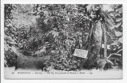 DC 1064 - WORTHING - Tarring. - The Fig Tree Planted By Thomas A Becket - LL 56 - Worthing