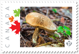 NEW!  MUSHROOM  - Unique Picture Postage Stamp MNH Canada 2018 P18-01sn09 - Mushrooms