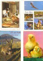 DIVERS ANIMAUX  /  Lot De 90 Cartes Postales Modernes écrites - Cartes Postales