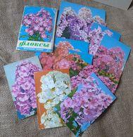 K2. Russia USSR Soviet Unposted Postcards Lot Set Of 10 Postcards Flora Blumen Flowers PHLOX Phloxes By Pravda 1977 - Postcards