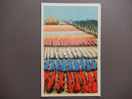 CPA - RARE - STUNNING VINTAGE CARD - PICTURE OF TULIP FIELDS - R11273 - Bloemen