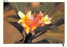 AFRIQUE Benin  Fleur De Frangipanier (flore) (MISSIONS AFRICAINES Photo Le Roux 195) *PRIX FIXE - Benin
