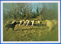COLLECTIONNEZ LES CARTES POSTALES FANTAISIES NOS ANIMAUX LES MOUTONS FERME AGRICULTURE PAYSANS - NOTRE SITE Serbon63 - Vaches