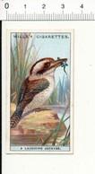 Laughing Jackass / Bird Oiseau  / IM 49/4-wills - Wills