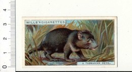 Tasmanian Devil / Diable De Tasmanie Animal  / IM 49/4-wills - Wills