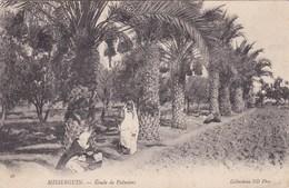 Misserguin - Etude De Palmiers - Animée - Algérie