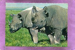 Afrikaanse Neushoorns - Spitzmaum Nashörner - African Rhinoceros - Rhinoceros Africains - Rhinocéros