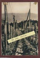 PHOTO - LE STRUTHOF. 67 - Les Barbelés Autour Du Camp De Concentration Allemand - Retirage En 14,5/10 Cm - History