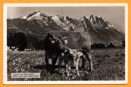 """"""" Küssen Ist Keine Sünd - Selbst Nicht Beim Lieben Rind """" - Vache Et Veau - Montagne - G. BISCHOFBERGER KEMPTEN Nr. 1357 - Cows"""