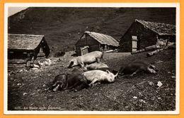 La Sieste Après Le Déjeuner - Cochon - Cochons - Montagne - GEORGES JAEGER - Cerdos