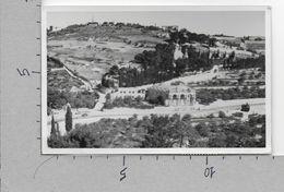 CARTOLINA VG GIORDANIA - Basilica Of Gethsemane - 9 X 14 - ANN. 1962 - Jordan
