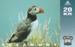 Faroe Islands - Bird - Puffin - Faroe Islands