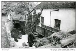 WEMMEL, Grens Meise (Vlaams-Brabant) - (water-) Molen/moulin à Eau: De Amelgemmolen In 1979. Zicht Op Het Bovenslagrad. - Wemmel