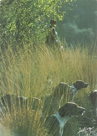 A L'AFFUT  - Photo G. HALLE . COLL FEELING . NON ECRITE - Agriculture