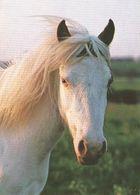 HORSES / PFERDE / CHEVAUX /  POSTCARD UNUSED    ( H  4637 ) - Pferde
