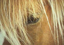 HORSES / PFERDE / CHEVAUX /  POSTCARD UNUSED    ( H  4640 ) - Pferde