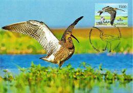 2011 - BIRD - EURASIAN WOODCOCK (Scolopax Rusticola) - Belarus