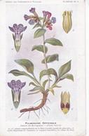 4 PULMONAIRE OFFICINALE - Plantes Médicinales