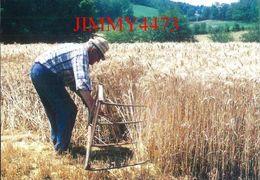 CPM - M. Marc Froidefond MOISSON DU SEIGLE A LA FAUX JAVELEUSE - LASCAUX 19 Corrèze - Edit. Du Pivert Jaune - Cultivation