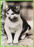 Voyo GERMANY/DDR  HAUSKATZE CAT 1983 Unused Planet 7539 Echt Foto - Katten