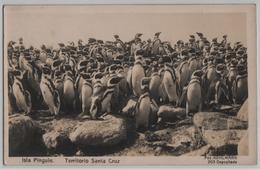 Isla Pinguin - Territoria Santa Cruz - Photo: Kohlmann No. 203 - Argentine