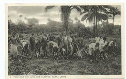 Africa Postcard Sierra Leone Preparing The Land For Planting Tucks Postcard Unused - Sierra Leone