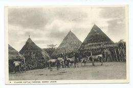 Africa Postcard Sierra Leone Village Cattle Farming Tucks Postcard Unused - Sierra Leone