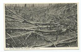 Africa Postcard Sierra Leone Felling Forests  Tucks Postcard Unused - Sierra Leone
