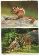 Animali - 2 Cartoline - Autres