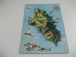 CARTA GEOGRAFICA  ISOLA DEL GIGLIO  TOSCANA - Carte Geografiche