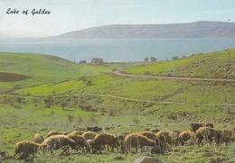 CARTOLINA - POSTCARD - ISRAELE  - LAKE OF GALILEE - Israele