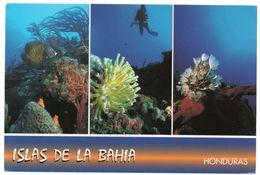 HONDURAS - UNDERWATER SCENES OF BAY ISLANDS / FISH - Honduras