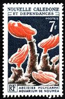 Nouvelle Calédonie  1964-65 -   YT 322  -  Ascidies Polycarpa -  NEUF** - Cote 2.50e - Nouvelle-Calédonie